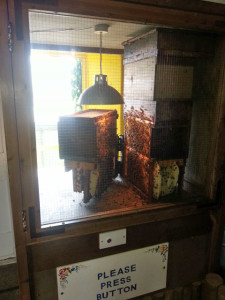 There were several different types of beehive and some of them could be opened by pressing a button which controlled a motor. Exactly the sort of thing kids love.